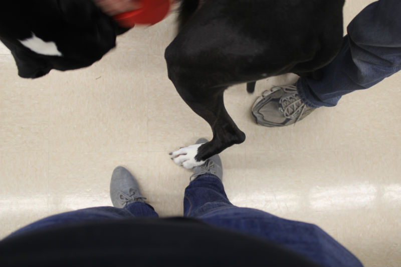 I absolutely LOVED having his foot on mine. One of the rescue volunteers said that her dog once stepped on her foot and she was convinced that it was broken!