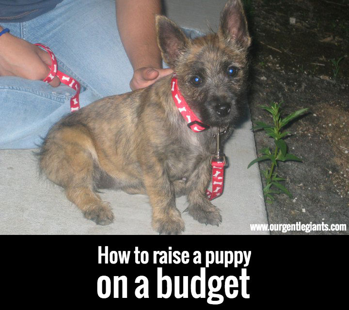 raise-puppy-on-budget-cheap