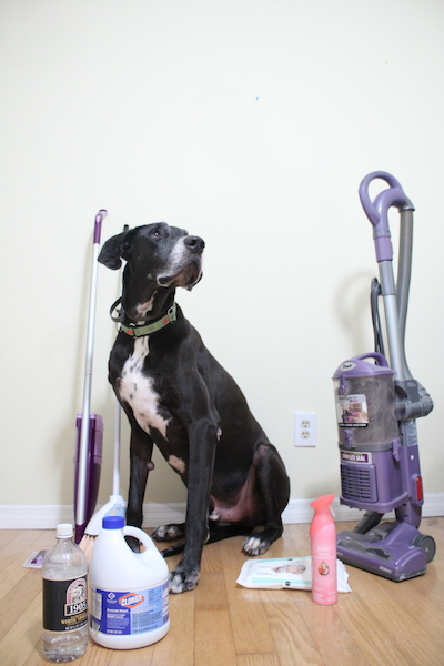 great-dane-clean