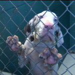 Desoto County Animal Control Needs Your Help