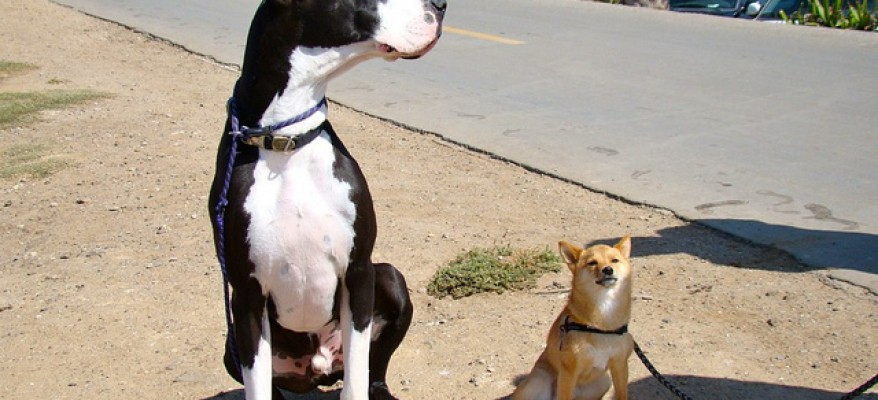 Why We Are Not Ready for Giant Dogs… Yet