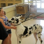 Meet-and-Greet with Great Dane Love