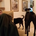 Our First Potential Adopter Home Visit
