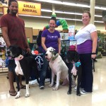 Ana's First Petco Event